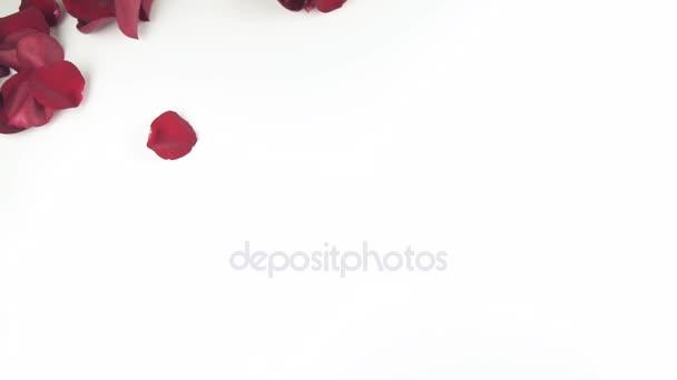 depositphotos stock video falling red rose petals