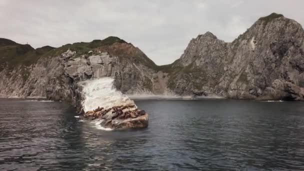Rookery Sysel lvů poblíž Russkaya Bay jihozápadní části Avača zálivu Tichého oceánu stopáže videa