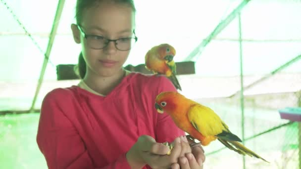Young girl feeds parrots Lovebird stock footage video