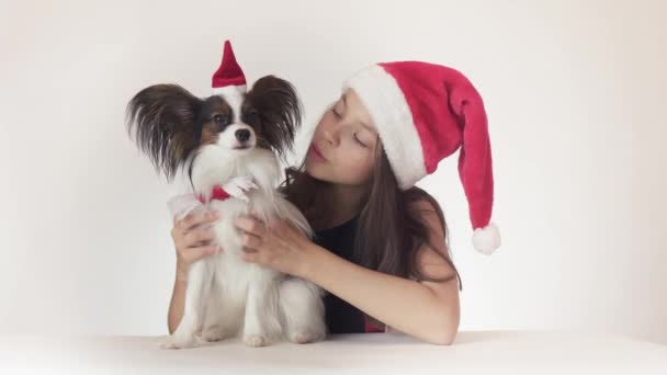 Beautiful teen girl and dog Continental Toy Spaniel Papillon in Santa Claus caps joyfully kissing and fooling around on white background stock footage video