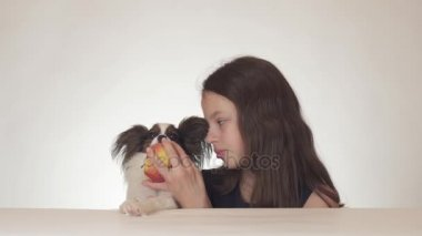 Beautiful teen girl and dog Continental Toy Spaniel Papillon eating tasty fresh red apple on white background stock footage video.