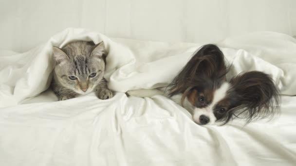 Gatto E Cane Si Trovano Sotto Coperta I Filmati Di Stock Di Letto