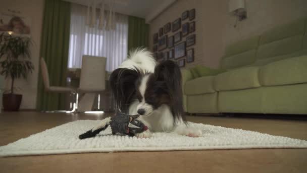 Tappeto Morbido Salotto : Cane papillon sta giocando con un giocattolo morbido sul tappeto