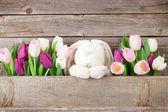 Fényképek Színes tulipán csokor és a nyúl játék, fából készült fal előtt. Húsvéti üdvözlőlap. A hely részére a Üdvözlet