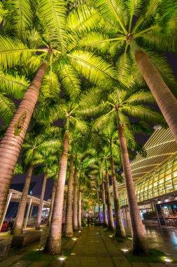 Palm trees in bulb light