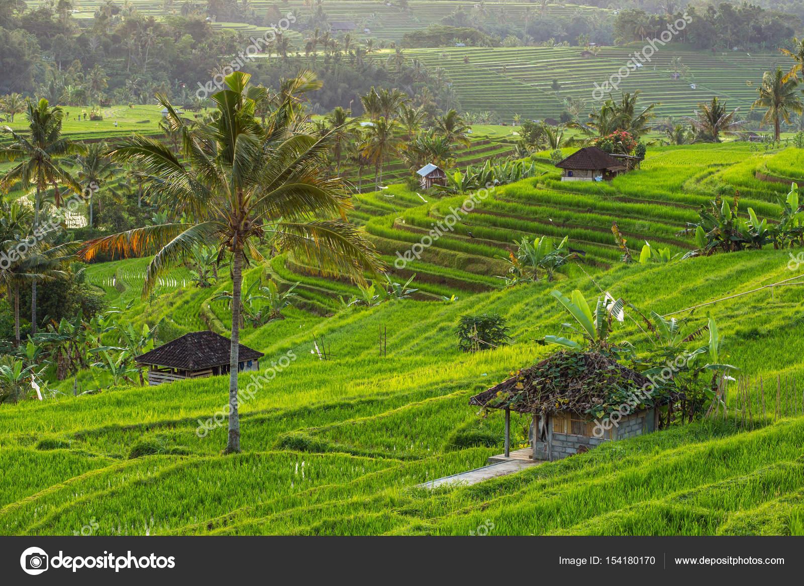 Jatiluwih Rice Terraces In Bali Stock Photo C Mazzzur 154180170
