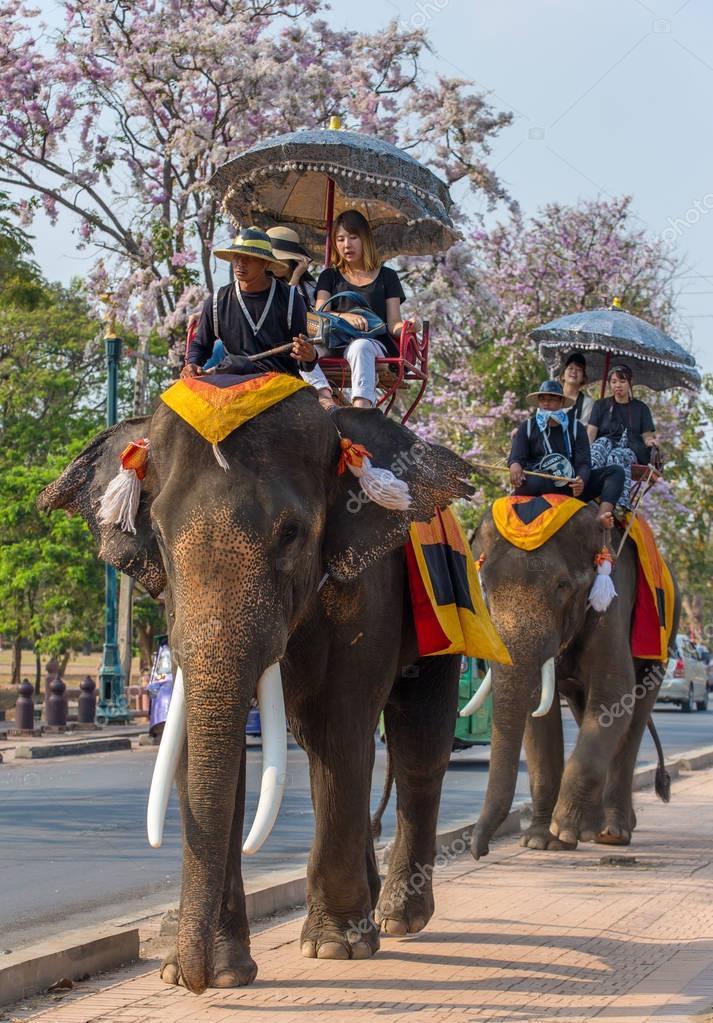 Tourists on elephants ride tour