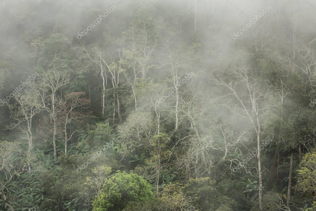 Morning fog in tropical forest