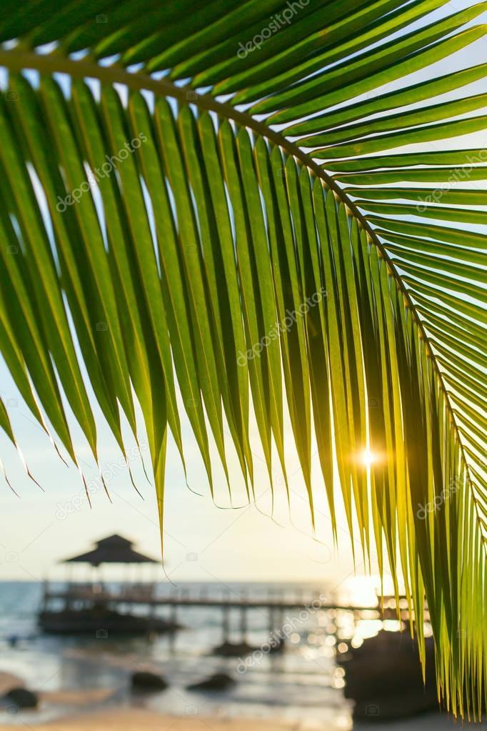 Palm tree leaf close-up during beautiful sunset on Koh Kood island, Thailand