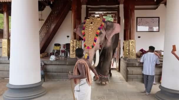Ismeretlen indiai férfi sétál egy elefánttal Keralban, Indiában.
