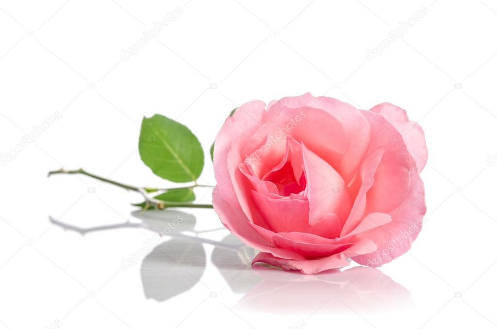 saint rose asian singles Welcome to uspscom find information on our most convenient and affordable shipping and mailing services use our quick tools to find locations, calculate prices.