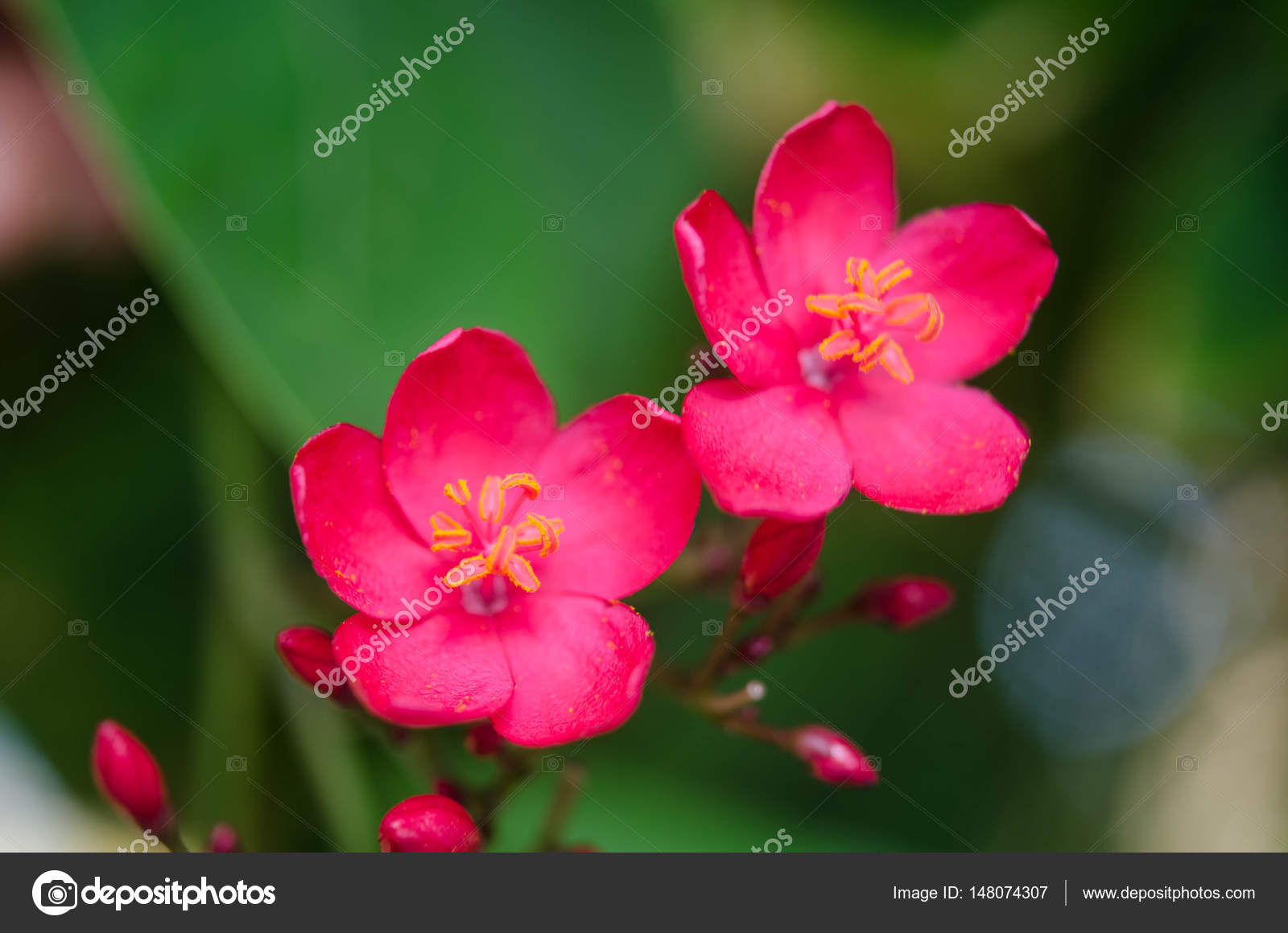 Flowering bushes with pink flowers stock photo soyka564 148074307 flowering bushes with pink flowers stock photo mightylinksfo
