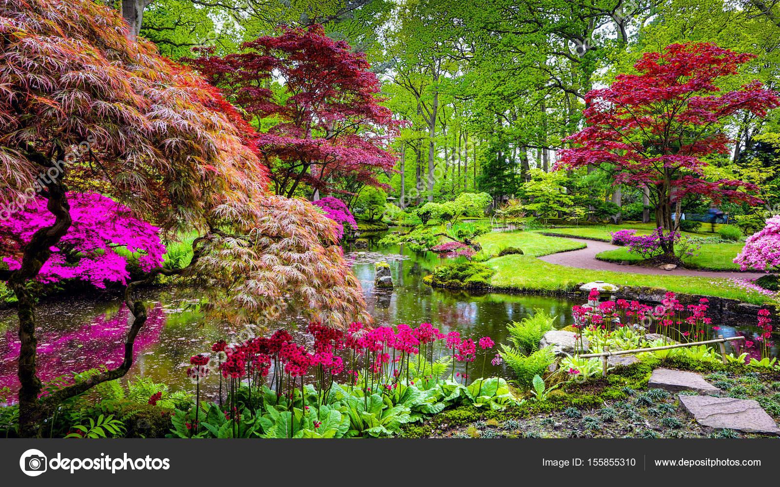 Japan Garden Flowers: Traditional Japanese Garden In The Hague.