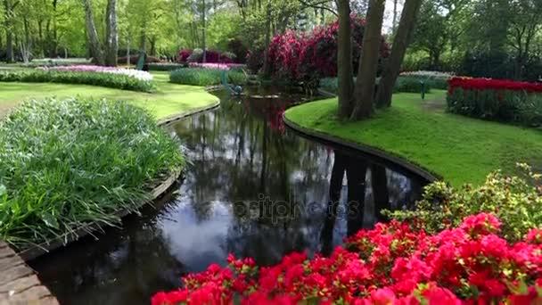 Rozkvetlé léto evropských zahradní park, Nizozemsko. HD záznam.