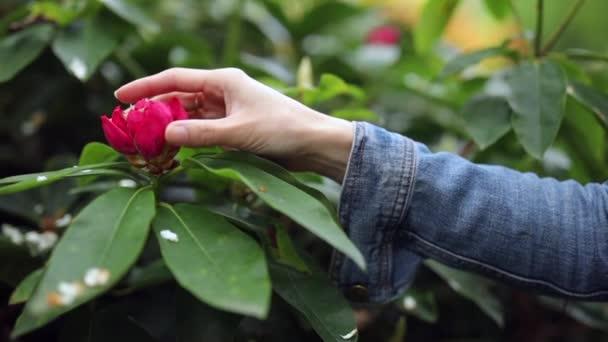 Dívka ruka detail touch krásný park exotických květin. Slow Motion záběry