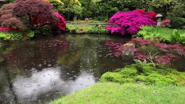 Lassított felvétel, virágzó európai kert  park elemek közelről, Hollandia.