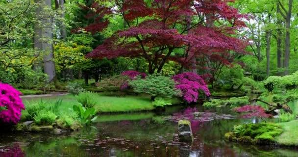 Tradiční japonská zahrada v Haagu. Záběr 4K 3 za 1.