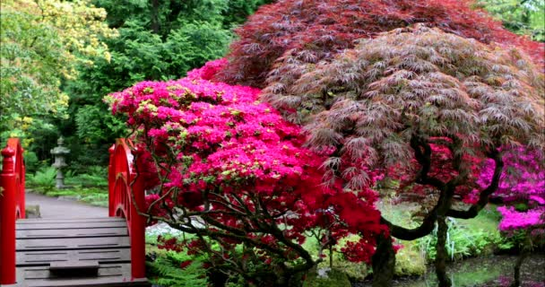 Traditioneller Japanischer Garten in Den Haag. 4K Footage 3 in 1.