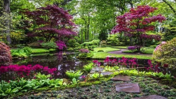 Tradiční japonská zahrada v Haagu. Záběry 4K.