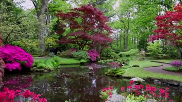 Traditioneller Japanischer Garten in Den Haag. Hd Verfilmung.