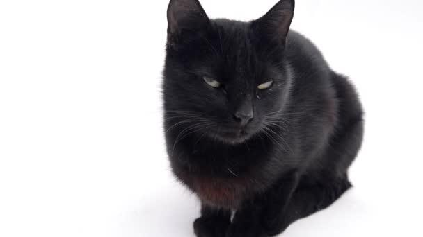 Černá kočička klip