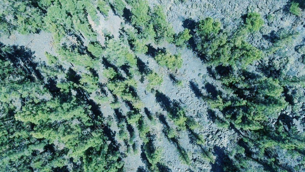 mountain road through trees