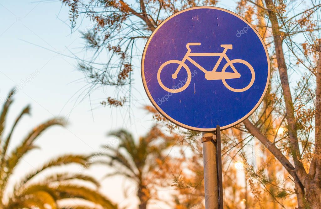 Bicycle lane at sunset with palms