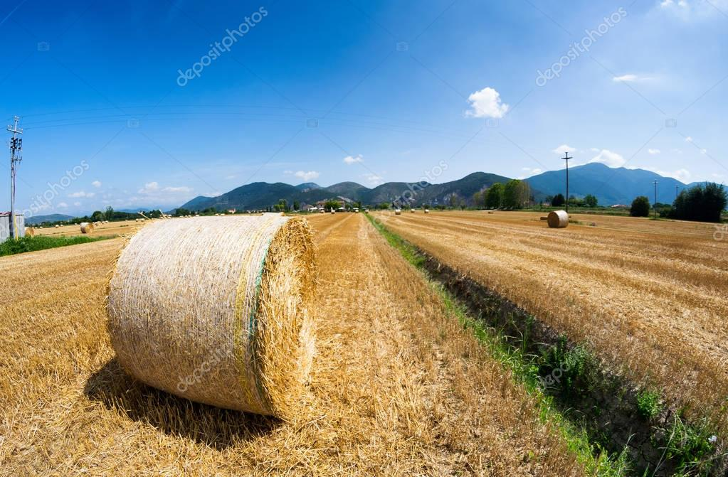 Hay ball in summer season