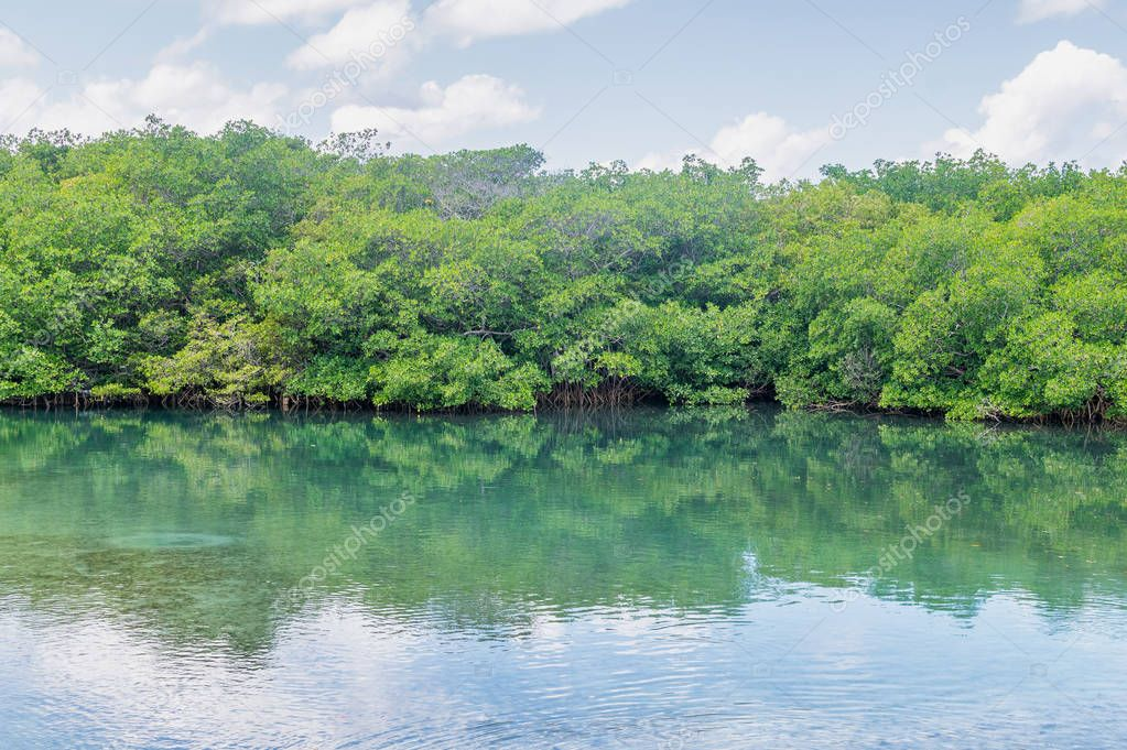 River with Mangroves, Cuba