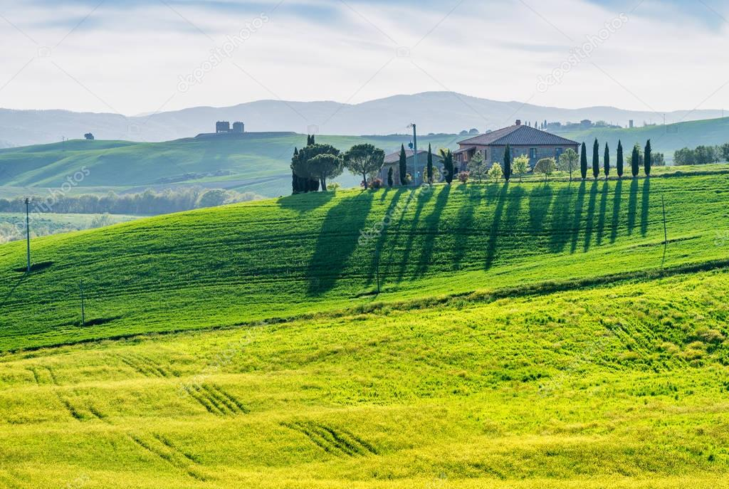 Trees in Tuscany. Countryside view in spring season