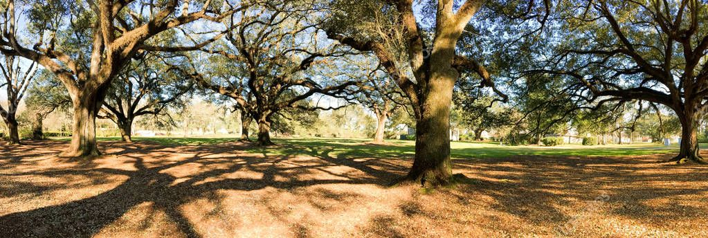 Panoramic view of Oak Alley Plantation, Louisiana
