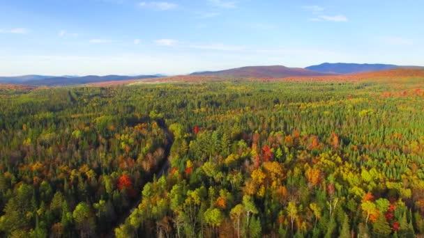 színes őszi erdő légi látképe