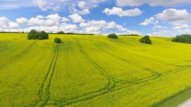 Overhead aerial panoramic view of meadow in summer season. Video