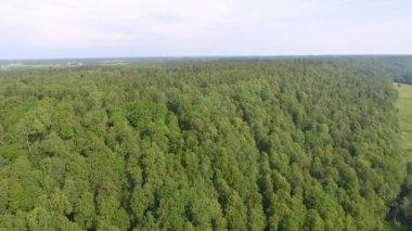 Gauja River in Vidzeme, Latvia, Gauja National Park, video
