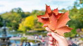 Womans hand holding autumn leaf in a city park
