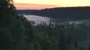 amazing view of evergreen forest and river at sunset