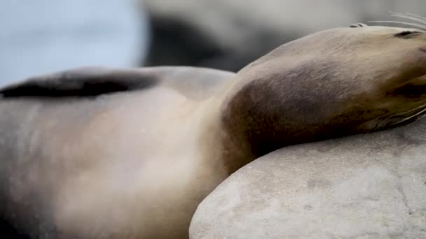 adorable seals lying at sandy beach, video