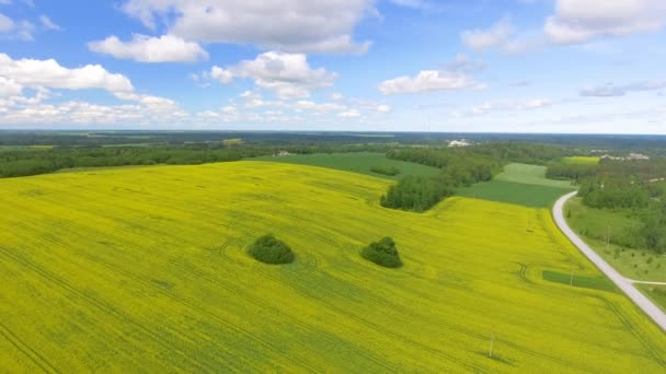 Overhead aerial panoramic view of meadow in summer season. Video