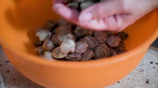 Frau bereitet frische Venusmuscheln in einem orangefarbenen Tablett zu