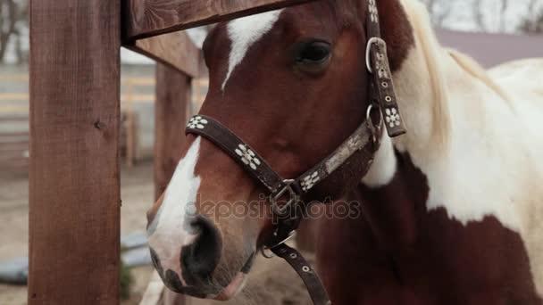 Pferd frisst Heu im Stall. Pferd frisst Heu. dreifarbige Pferd frisst Heu auf der Straße. der bewölkte Tag und das Pferd frisst Heu. ein Pferd steht im Gehege.