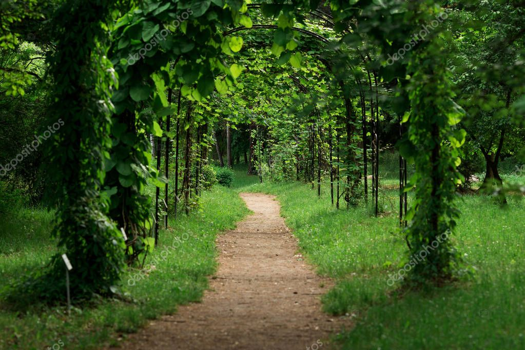 arch into green vine arch path in summer park