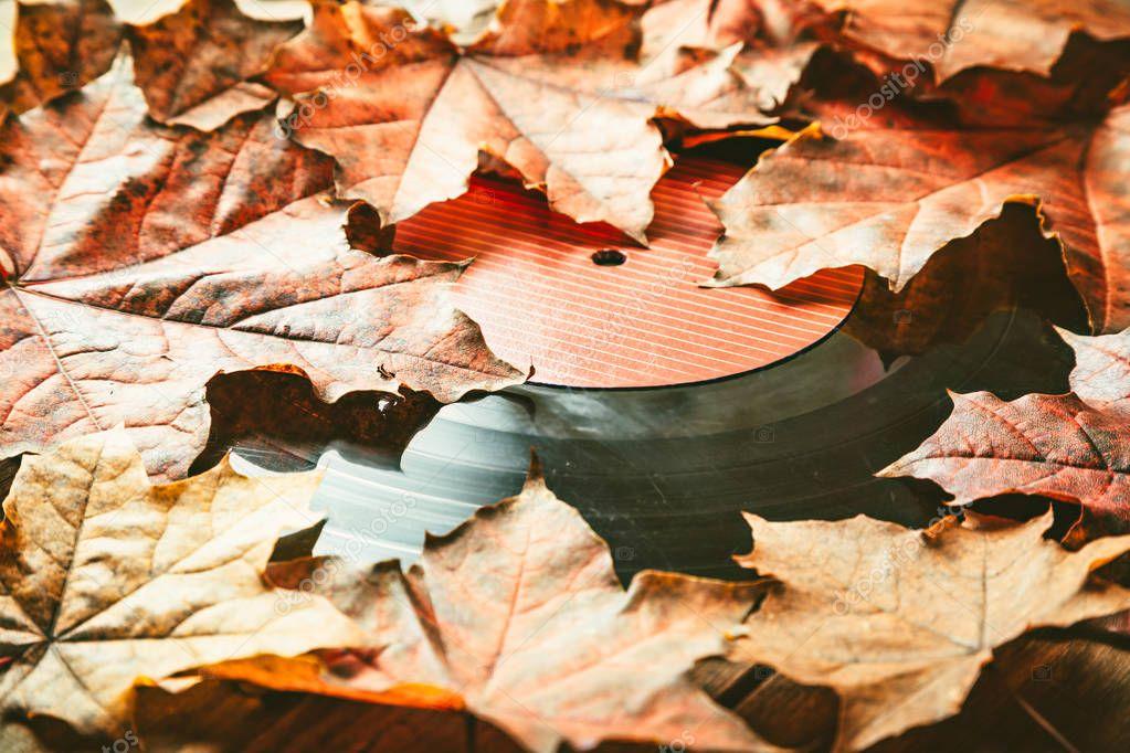 Gramplastine on fallen autumn foliage.