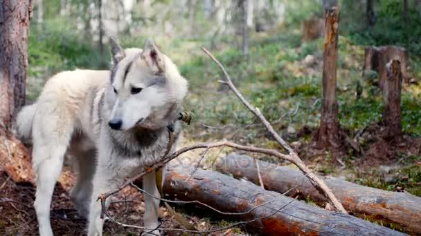в рот в лесу