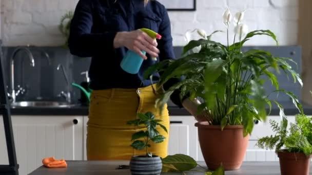 Žena výsadba a zalévání květináče doma