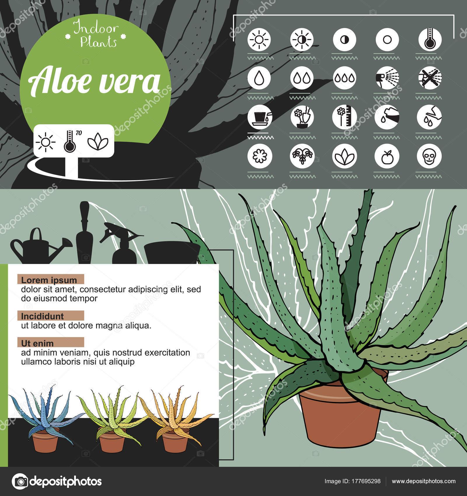 https://st3.depositphotos.com/1001377/17769/v/1600/depositphotos_177695298-stock-illustration-template-indoor-plant-aloe-vera.jpg