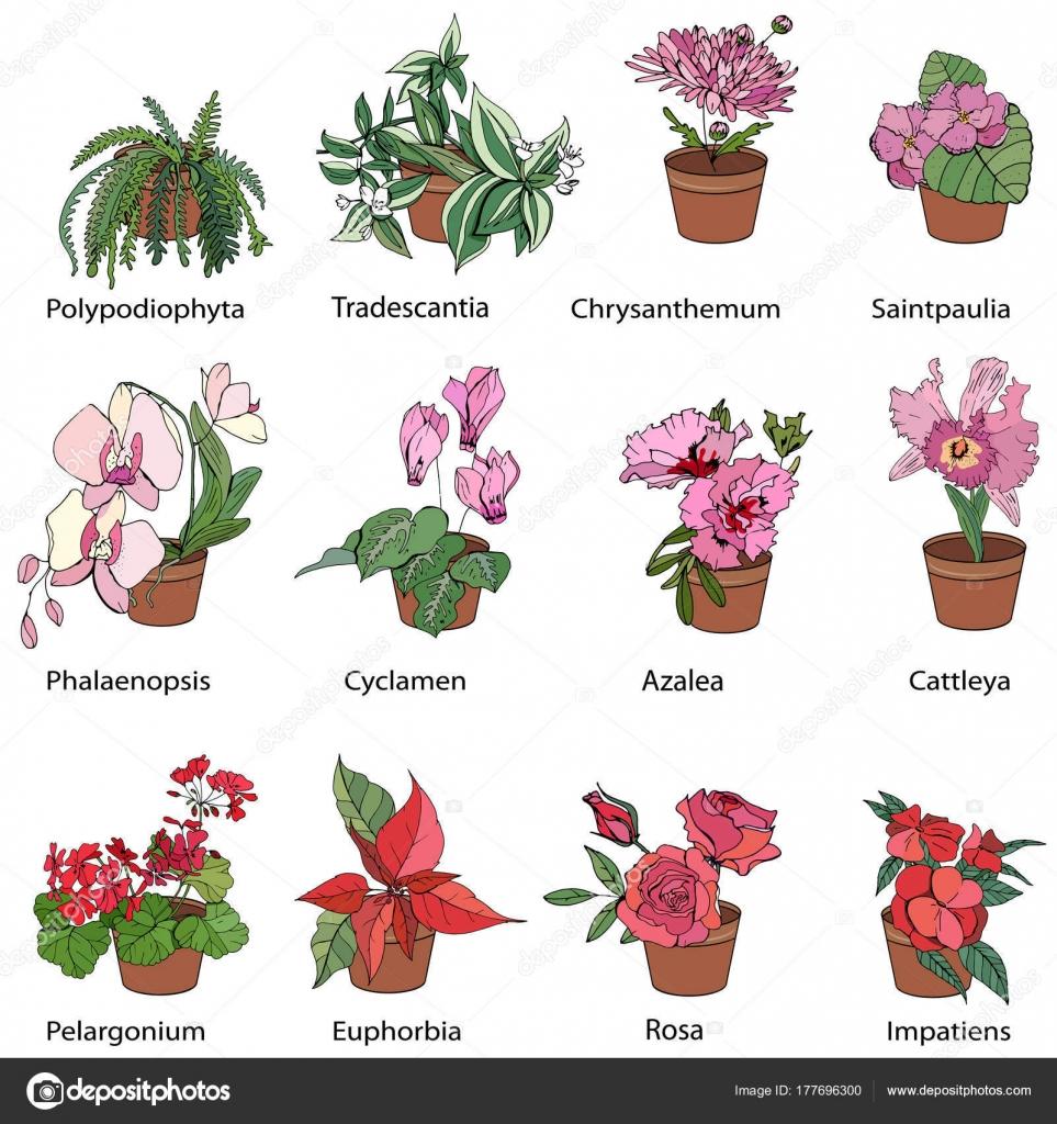 Conjunto Diferentes Plantas Interior Típicas Iconos Con Flores