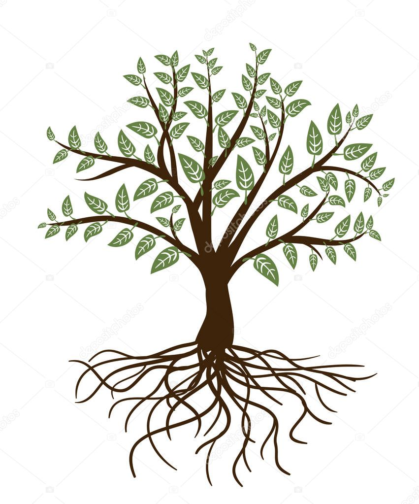 abstract tree with green leaves and roots on white. vector