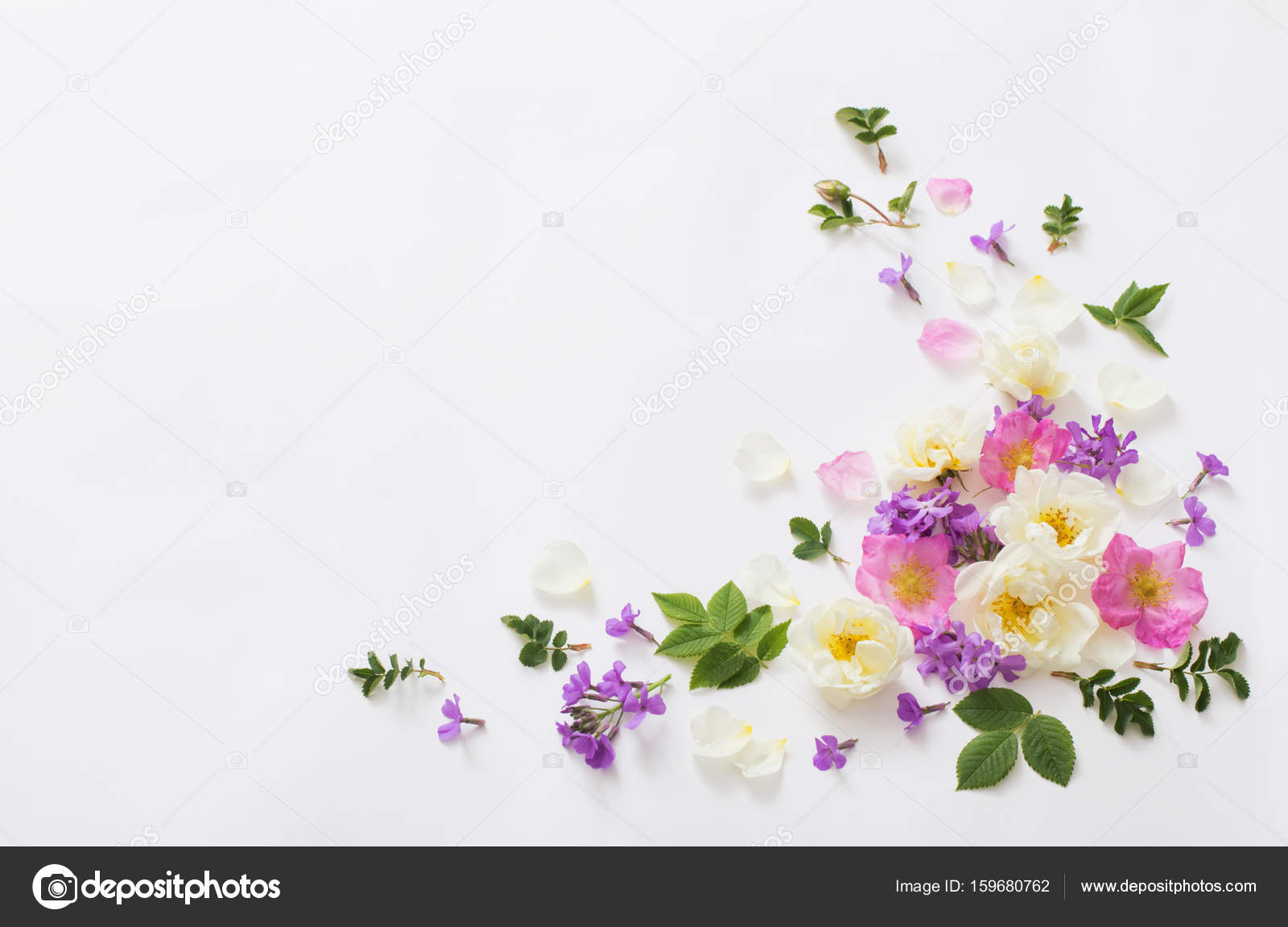 Summer Flowers On White Background Stock Photo Kruchenkova