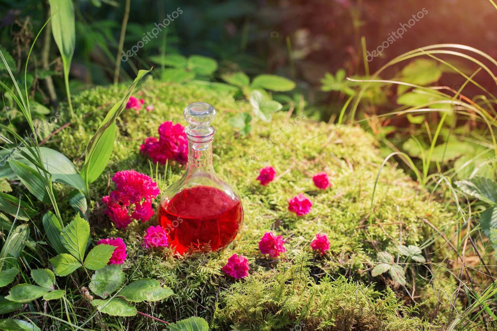 Magic potion in bottle in forest