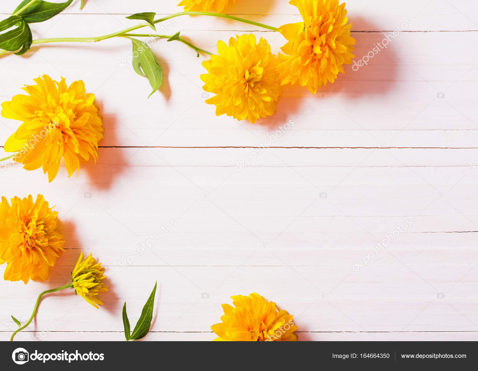 Yellow Flowers On White Background Stock Photo Kruchenkova